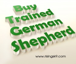 Buy Trained German Shepherd