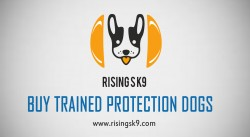 Buy Trained Protection Dogs
