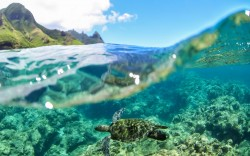Stand Up Paddle Kauai Rental