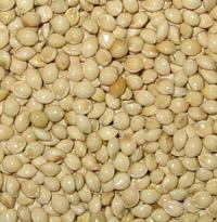 Glutinous Millet