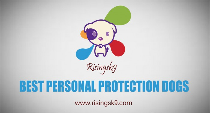 Best Personal Protection Dogs