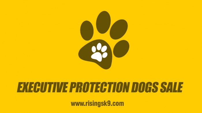 Executive Protection Dogs Sale