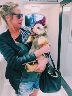 Dog Groom West Hollywood CA