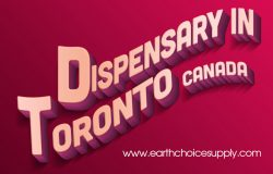 Dispensary Toronto Canada | Call Us – 416-922-7238 | earthchoicesupply.com