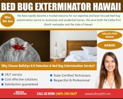 Bed Bug Exterminator Hawaii | 4692000637 | bullseyek9.com