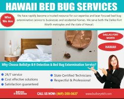 Hawaii Bed Bug Services | 4692000637 | bullseyek9.com