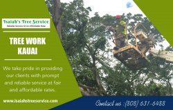 Tree Work in Kauai