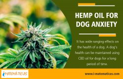 Hemp Oil For Dog Anxiety