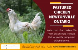 Pastured Chicken Newtonville Ontario