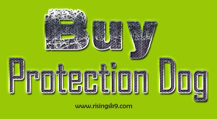 Buy protection dog