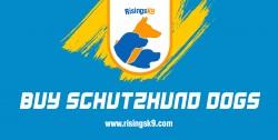 Buy Schutzhund Dogs