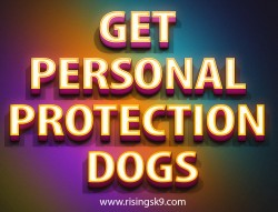 Get Personal Protection Dogs