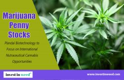 Marijuana Penny Stocks | investinweed.com