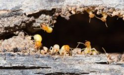 Pest Control Greensborough – Termite Inspection, Treatment & Control